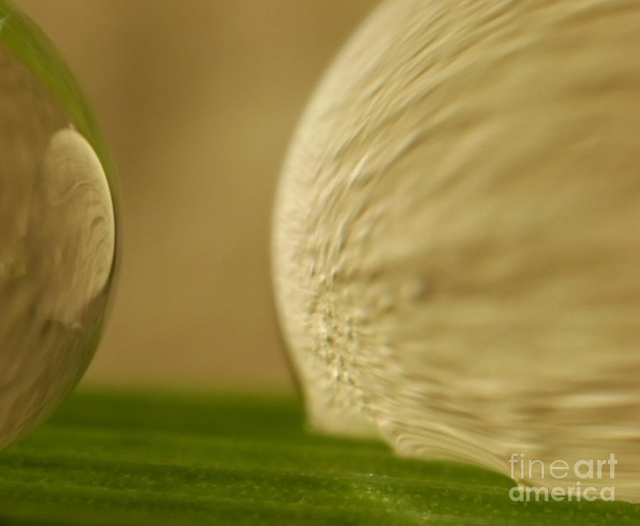 Raindrop Photograph - C Ribet Orbscape 0277 by C Ribet