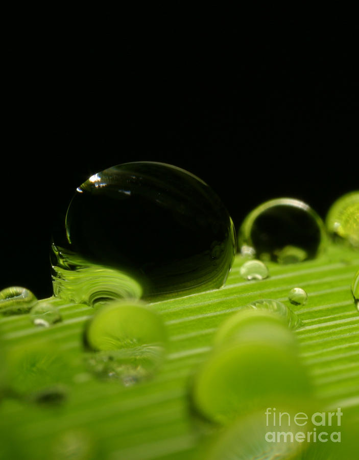 Raindrop Photograph - C Ribet Orbscape Water Soul by C Ribet