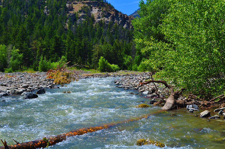 Cabin Creek Clothing: Cabin Creek Shoshone National Forest Photograph By Lisa
