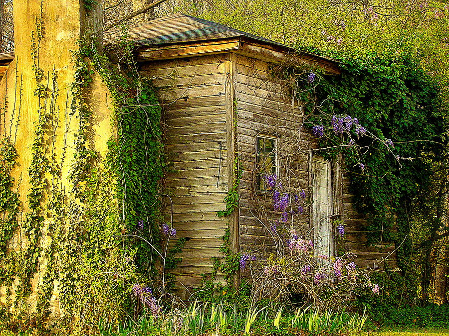 Still Life Photograph - Cabin In The Back by Rodney Lee Williams