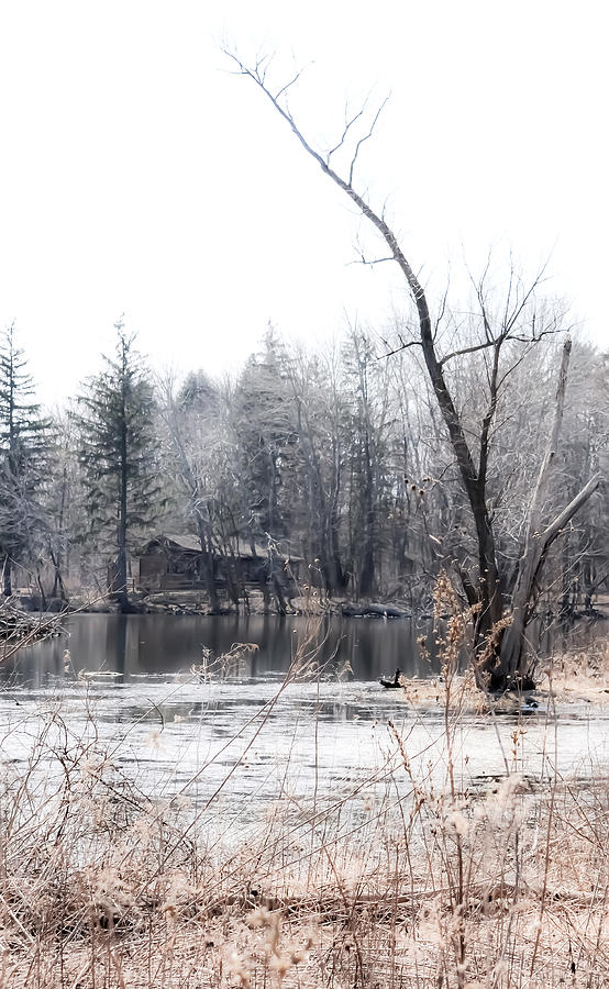 Water Photograph - Cabin In The Woods by Julie Palencia
