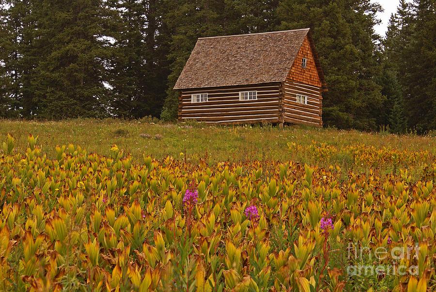 Grand Mesa Photograph - Cabin On Grand Mesa by Kelly Black
