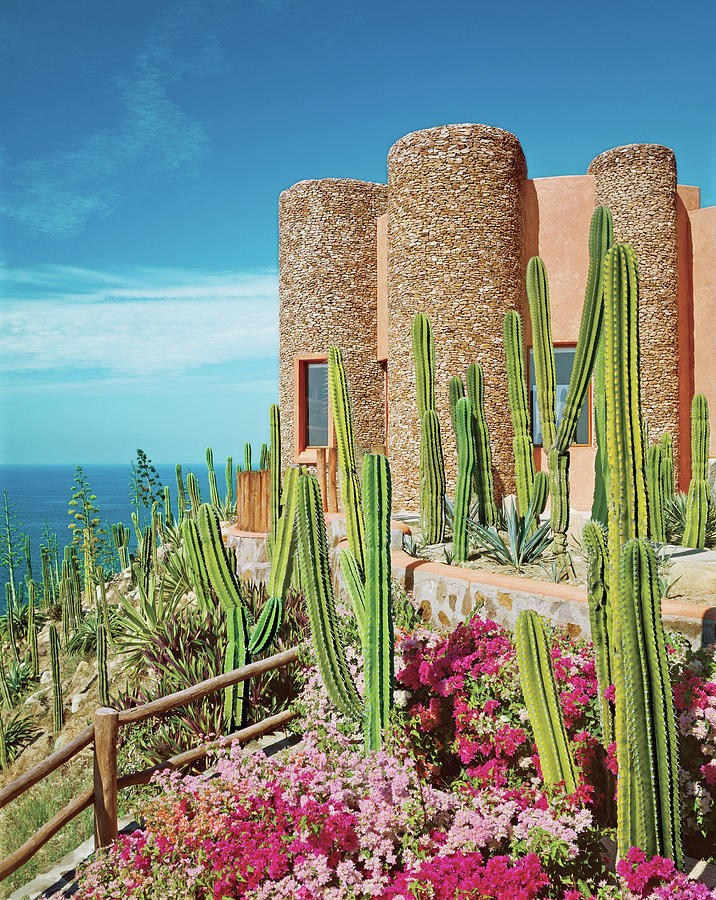 Cacti And Bougainvilleas In Front Of Tower Photograph by David O Marlow