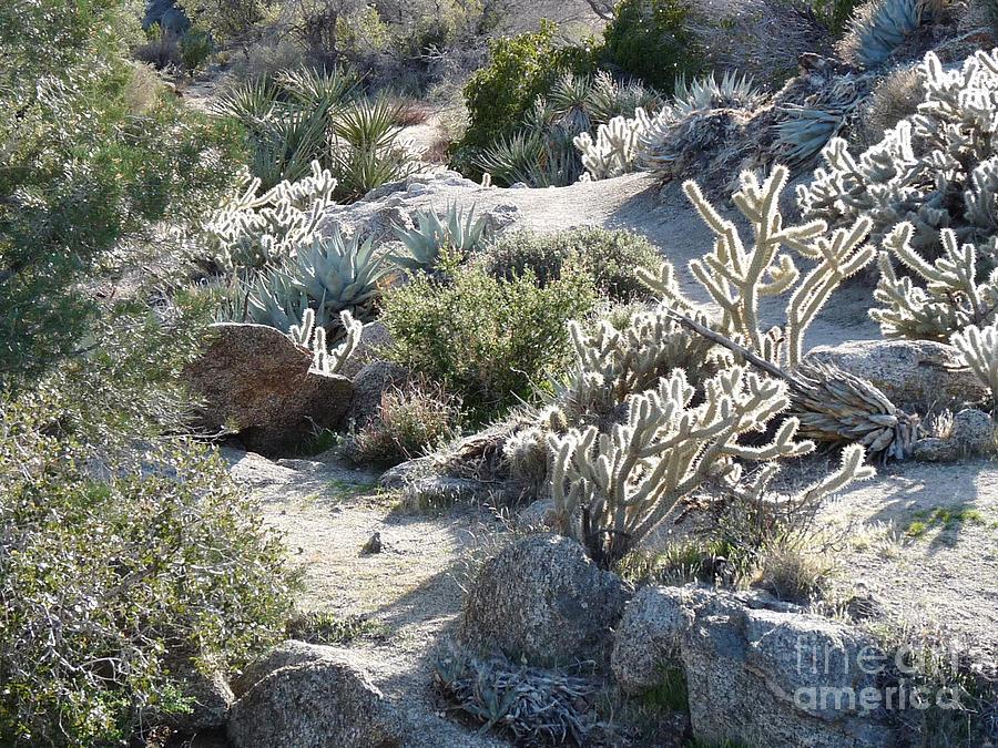 Cactus Photograph - Cactus And Rocks by Deborah Smolinske