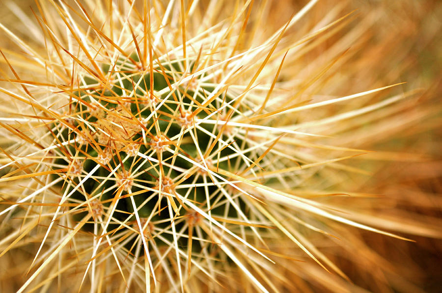 Cactus Photograph by Brianbalster