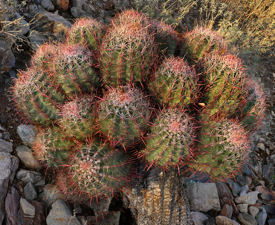 Cactus Photograph - Cactus Burst by Stephen Farley