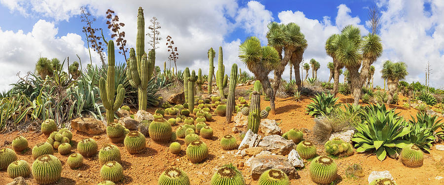 Cactus Country Photograph by Cinoby