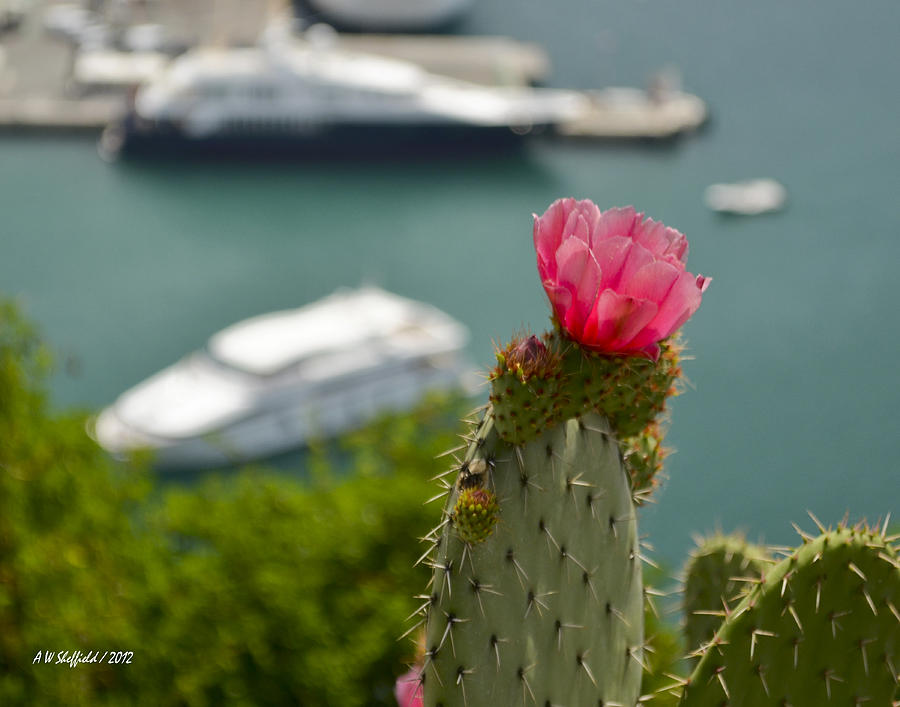 Nice Photograph - Cactus Flower Above The Port Of Nice by Allen Sheffield