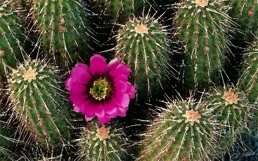 Succulent Painting - Cactus Flower by Cole Black
