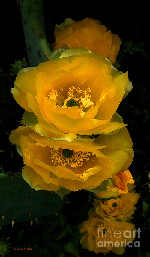 Cactus flower song photograph by ck caldwell cactus photograph cactus flower song by ck caldwell mightylinksfo