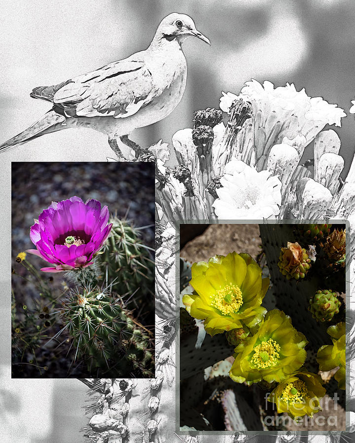 Collages Digital Art - Cactus Flowers 01 by David Mendoza