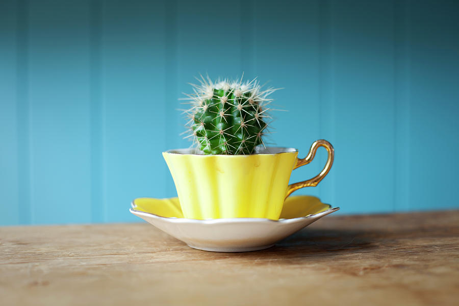 Cactus Growing In Teacup On Desk Photograph by Ian Nolan
