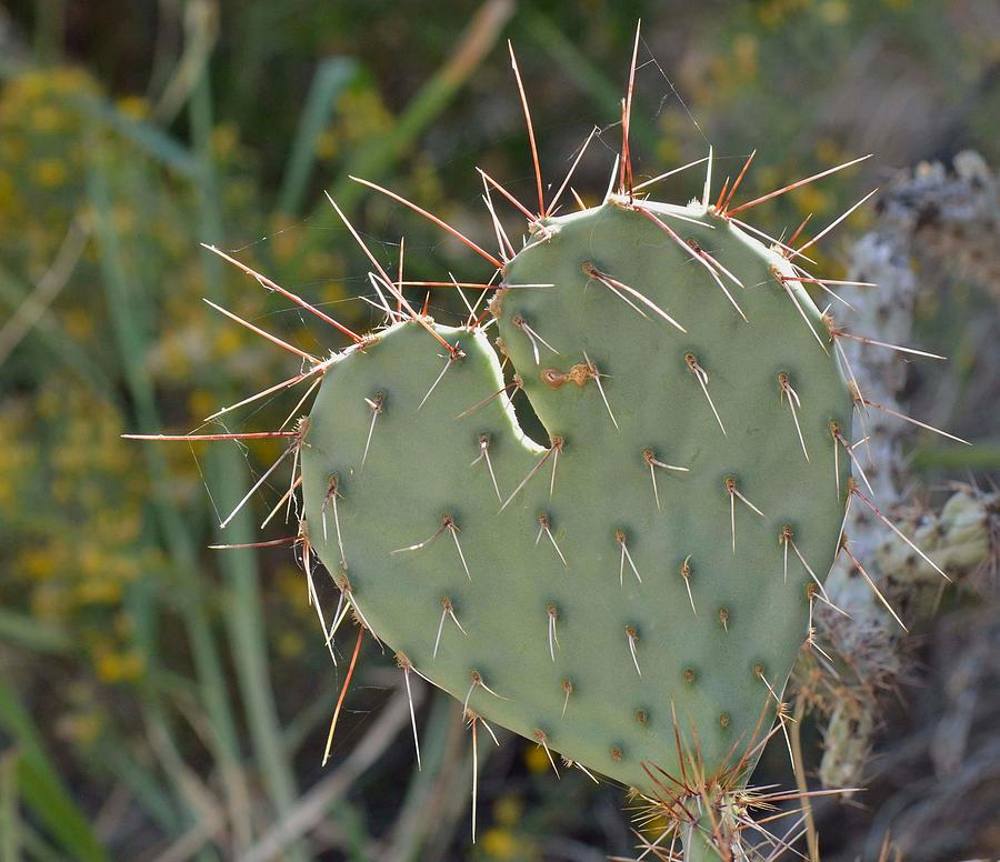 Cactus Photograph - Cactus Heart by Old Pueblo Photography