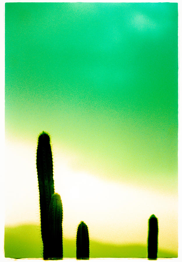 Color Photograph - Cactus In The Morning by Yo Pedro