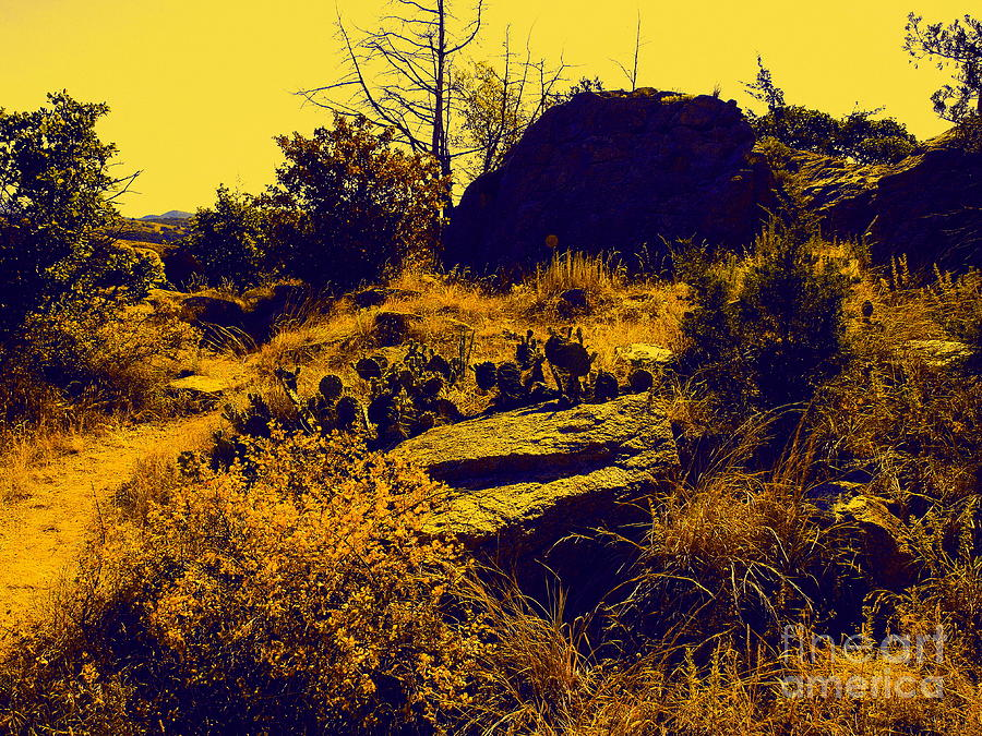 Landscape Photograph - Cactus by Mickey Harkins