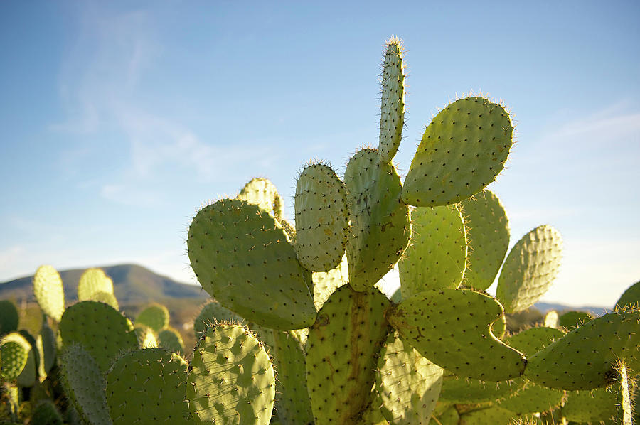 Cactus Patch Photograph by Hilary Brodey