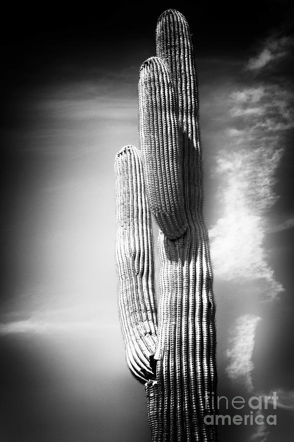 Cactus Photograph - Cactus Spoltlight by John Rizzuto