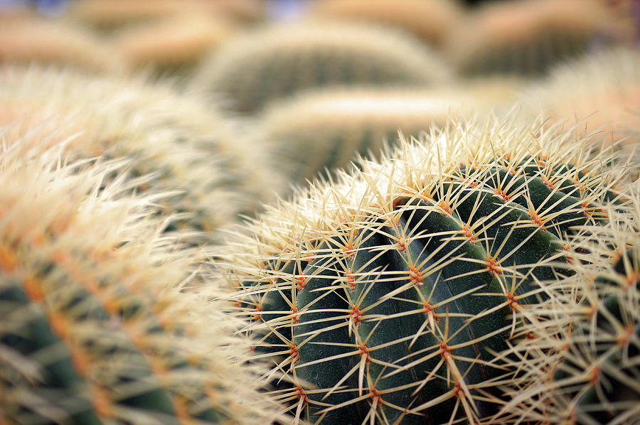 Cactus Photograph by The Landscape Of Regional Cities In Japan.