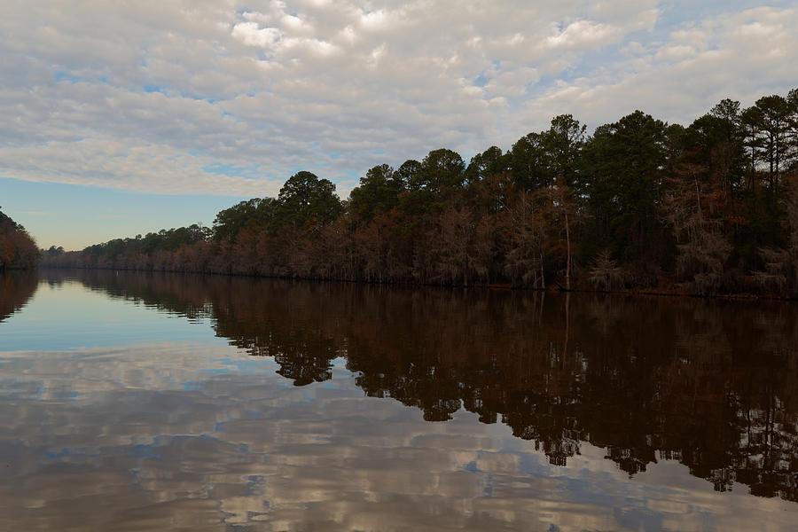 Caddo Lake Bald Cypress Reflection Photograph