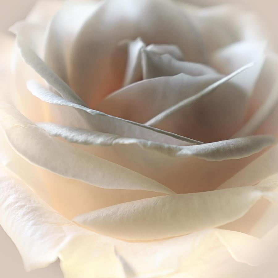 Floral Photograph - Cafe Latte by Darlene Kwiatkowski