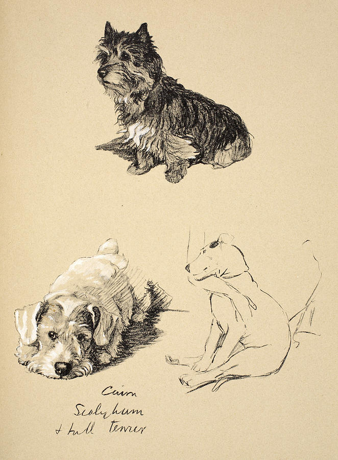 Dog Drawing - Cairn, Sealyham And Bull Terrier, 1930 by Cecil Charles Windsor Aldin