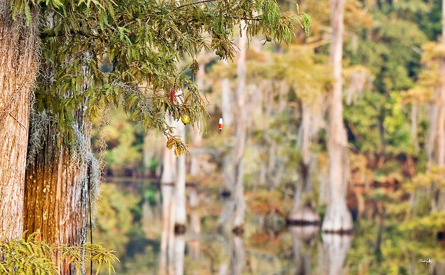 Cypress Tree Photograph - Cajun Ornaments by Scott Pellegrin