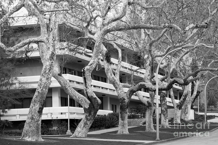 American Photograph - Cal Poly Pomona Landscape by University Icons