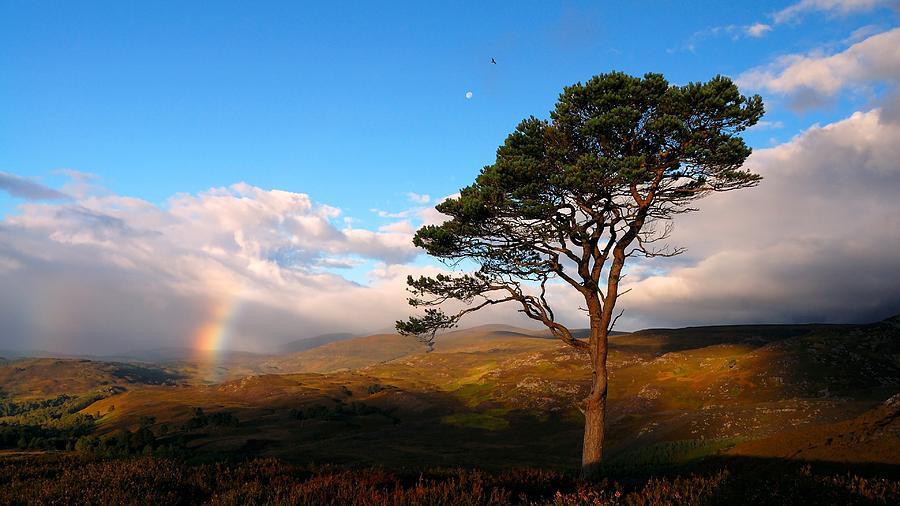 Scots Pine Photograph - Caledonian Colours by Macrae Images