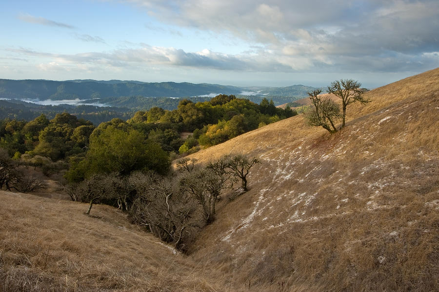 Russian Ridge Open Space Photograph - California Buckeyes After Dusting by Matt Tilghman