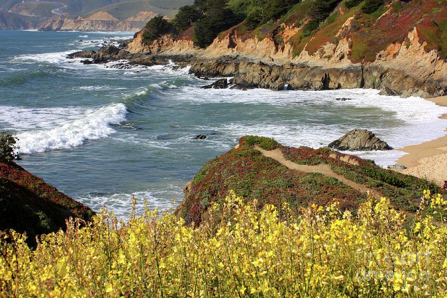 California Photograph - California Coast Overlook by Carol Groenen