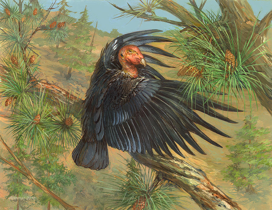 Wildlife Painting - California Condor by ACE Coinage painting by Michael Rothman