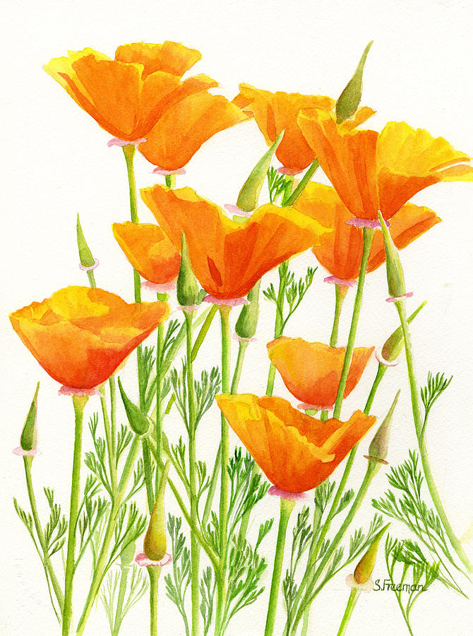 Watercolor Painting - California Poppies by Sharon Freeman