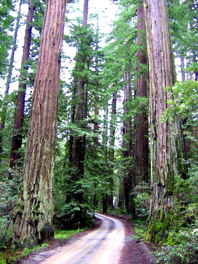 California Redwoods 1 Digital Art