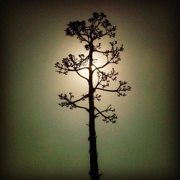 Succulent Digital Art - California Sun  by Natalya Karavay