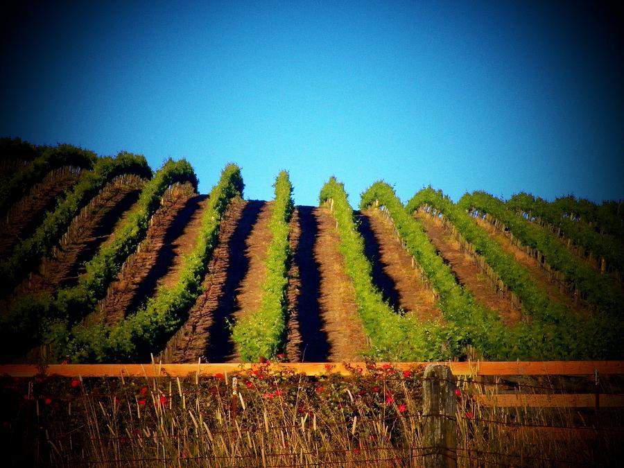 California Photograph - California Vineyard by Joyce Kimble Smith