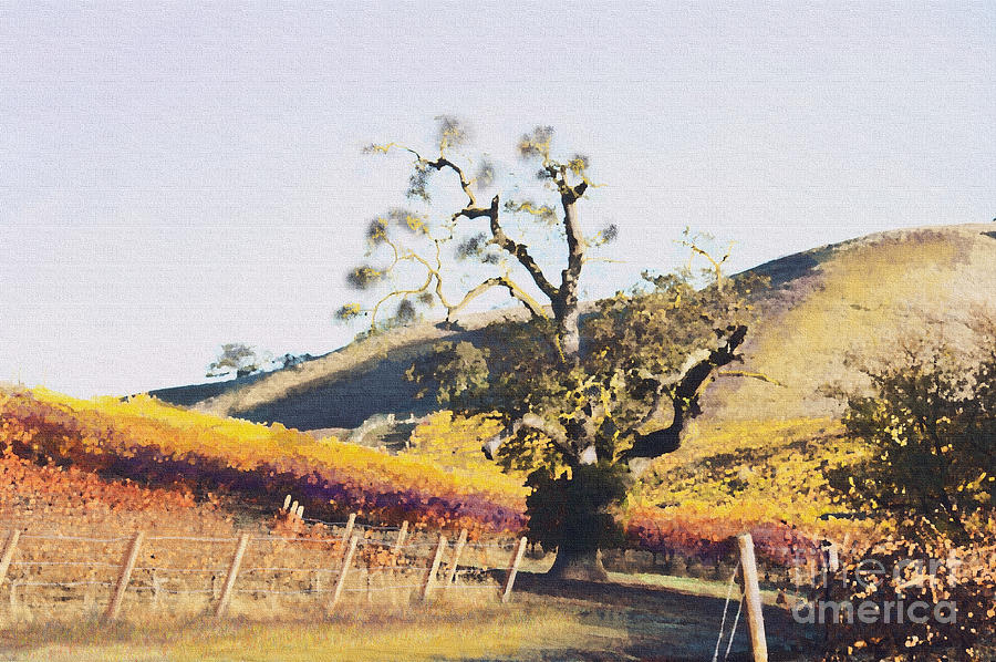 California Wine Country Painting - California Vineyard Series Oaks In The Vineyard by Artist and Photographer Laura Wrede