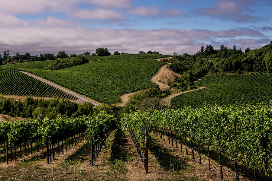California Wine Producers Expecting Photograph by George Rose