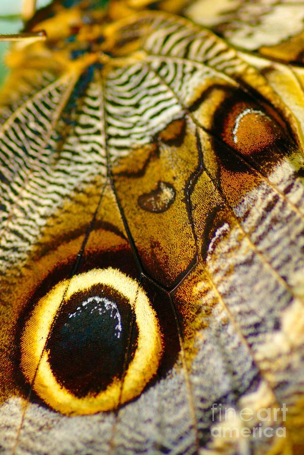 Wing Photograph - Caligo Atreus by Floyd Menezes