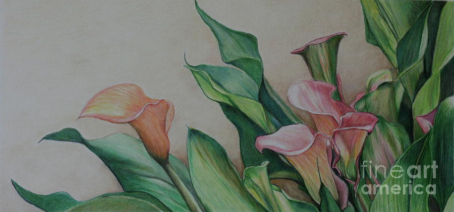 Flower Drawing - Calla Lilies by Charlotte Yealey