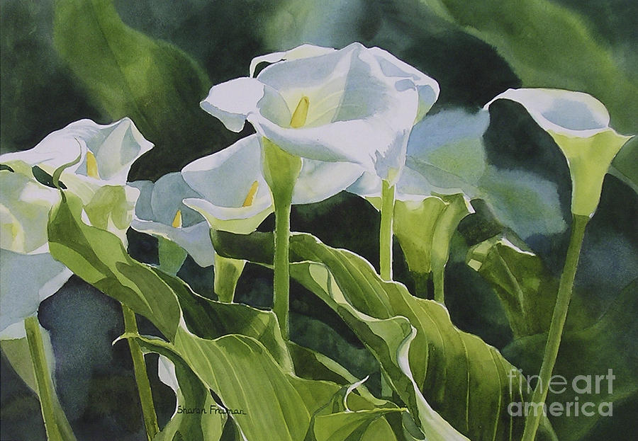 Calla Lilies Horizontal Design Painting by Sharon Freeman