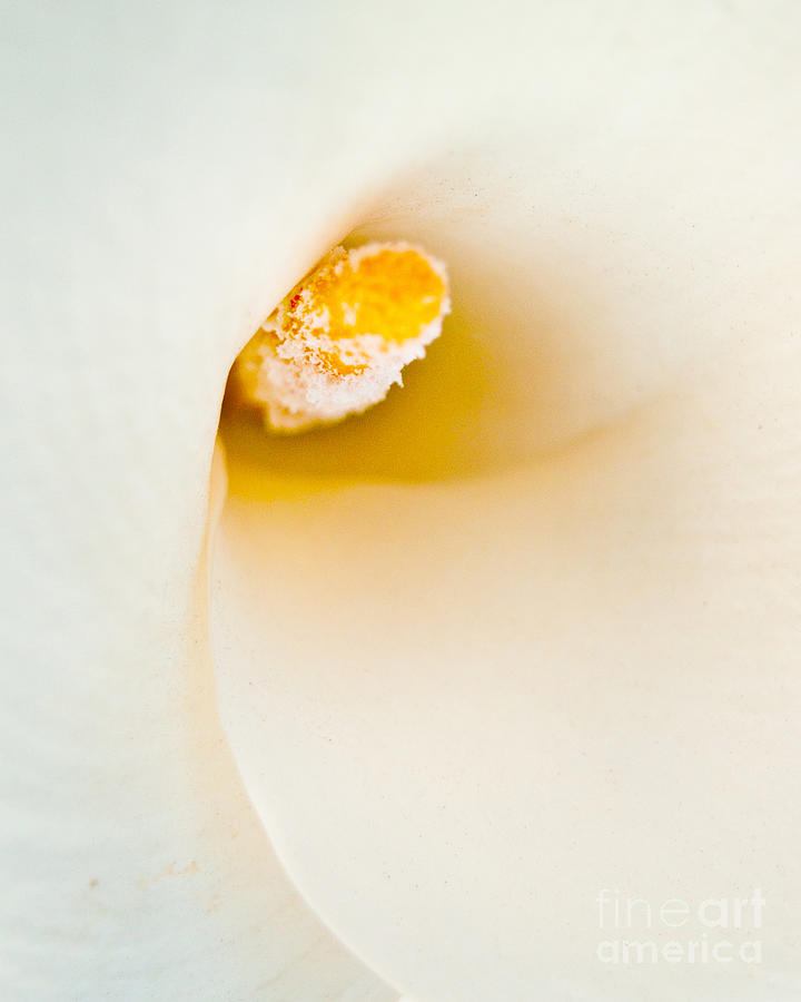 Calla Lily Photograph - Calla Lilly by Bill Gallagher
