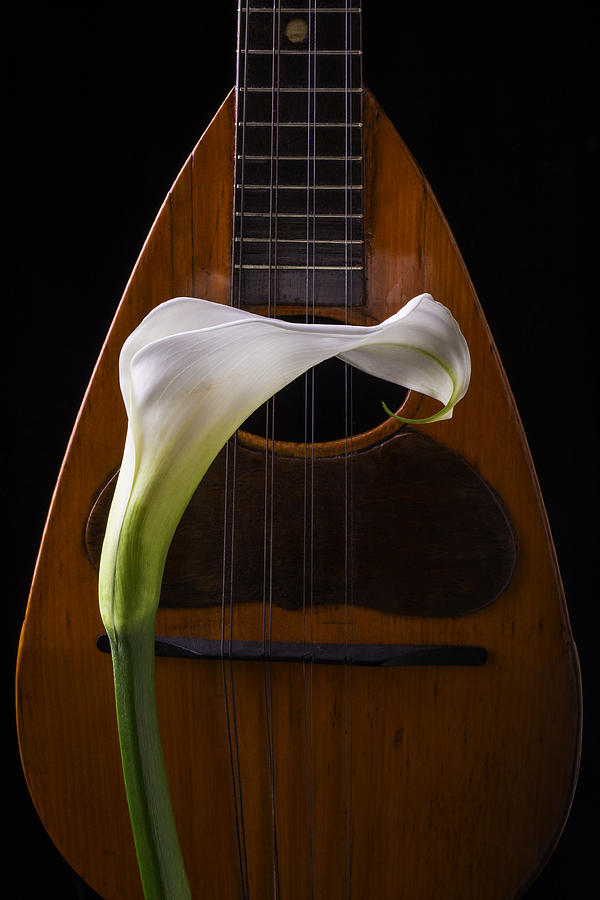 Graphic Photograph - Calla Lily And Mandolin by Garry Gay