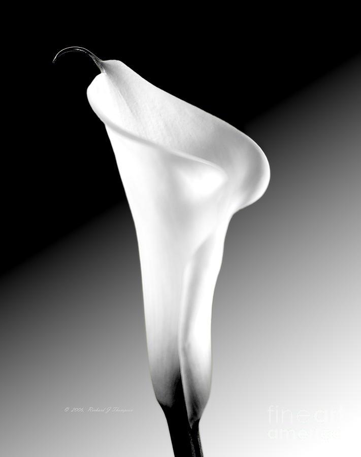 Calla Lily Photograph - Calla Lily Bw by Richard J Thompson