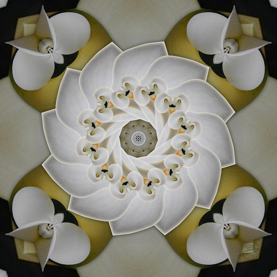 Mandala Photograph - Cochlear Calla Lily by Karen Hochman Brown