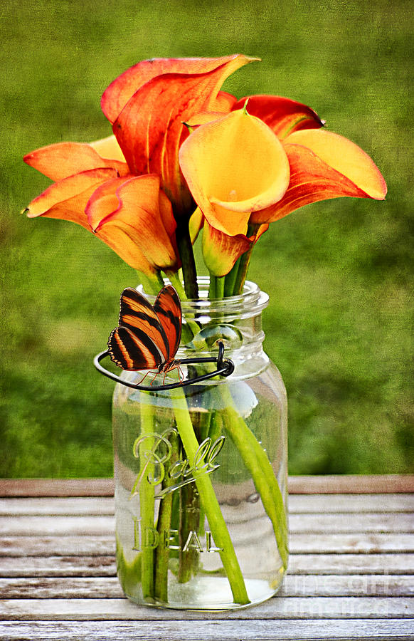 Mason Jar Photograph - Callas And The Butterfly by Darren Fisher