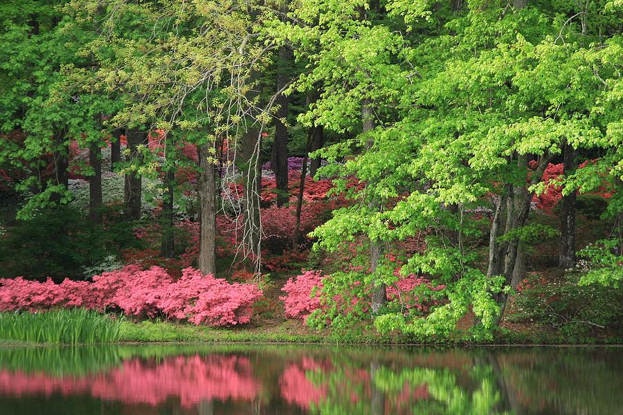 Callaway Gardens 1 Photograph