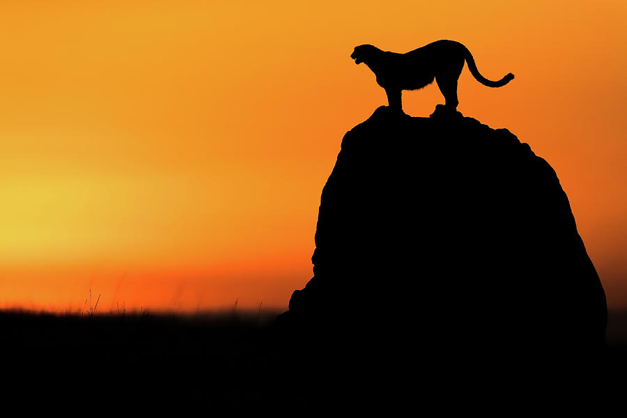 Wild Photograph - Calling For A Hunt by Faisal Alnomas
