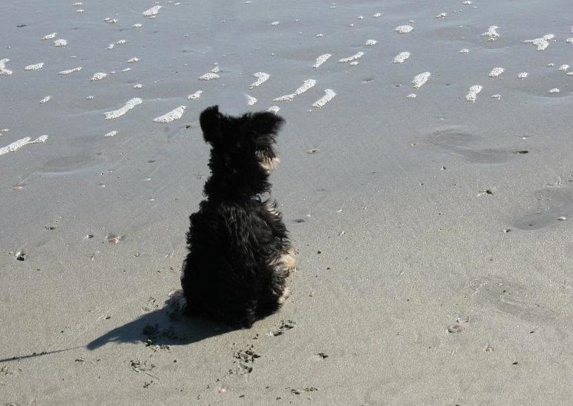 Dog Photograph - Calm Wave by Static Studios