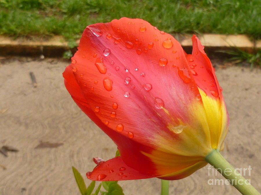 Raindrops Photograph - Calming After The Rain by Lingfai Leung