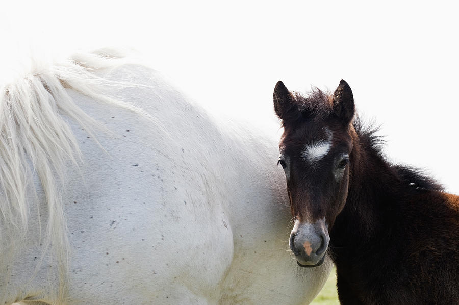 Camargue Horse And Foal Photograph by Franz Aberham